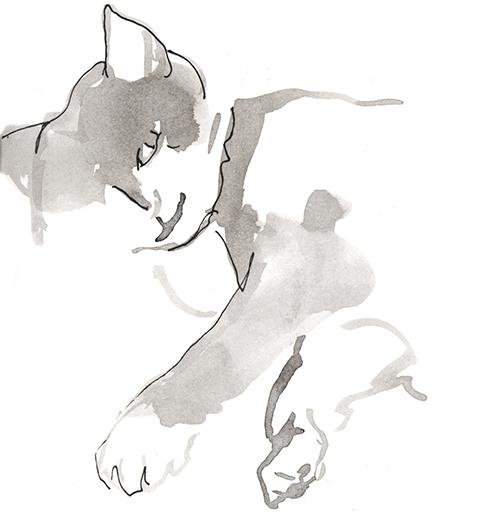 Frankie_cat_drawings_bamboo_pen