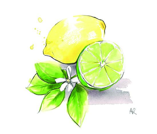 lemon-and-lime-watercolour-illustration