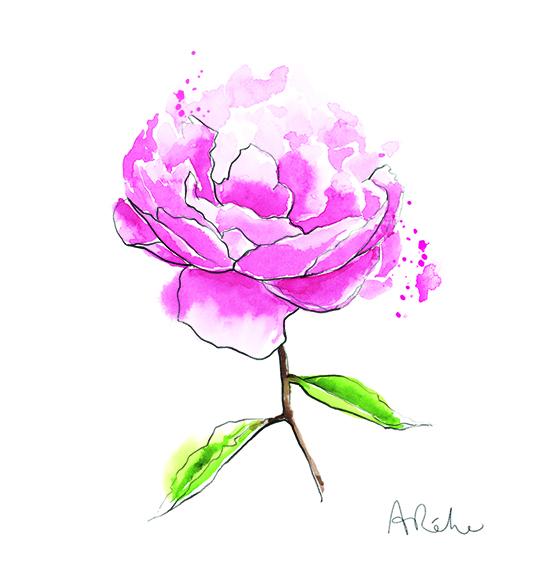 pink-peony-illustration